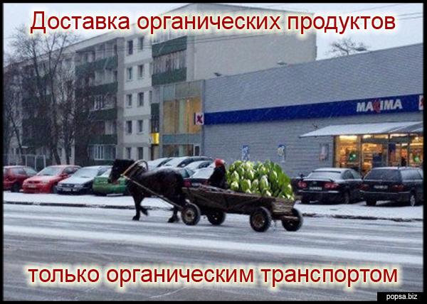 popsa.biz -organik
