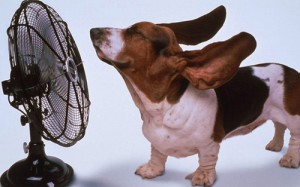 popsa.biz реклама вентилятора