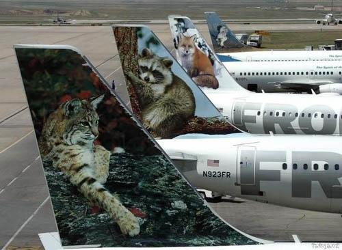 popsa biz-реклама на самолетах-26