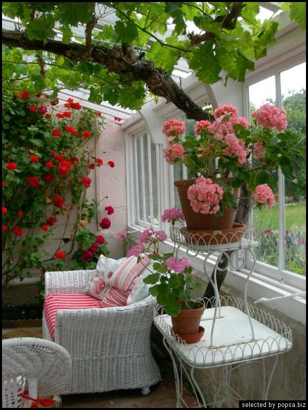 popsa biz зимний сад - дизайн - бизнес - комфорт 14.jpg
