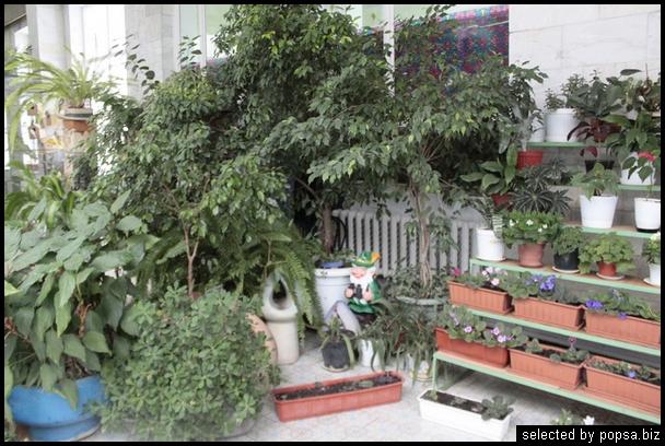 popsa biz зимний сад - дизайн - бизнес - комфорт 22.jpg