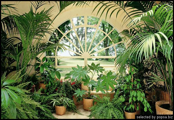 popsa biz зимний сад - дизайн - бизнес - комфорт 25.jpg